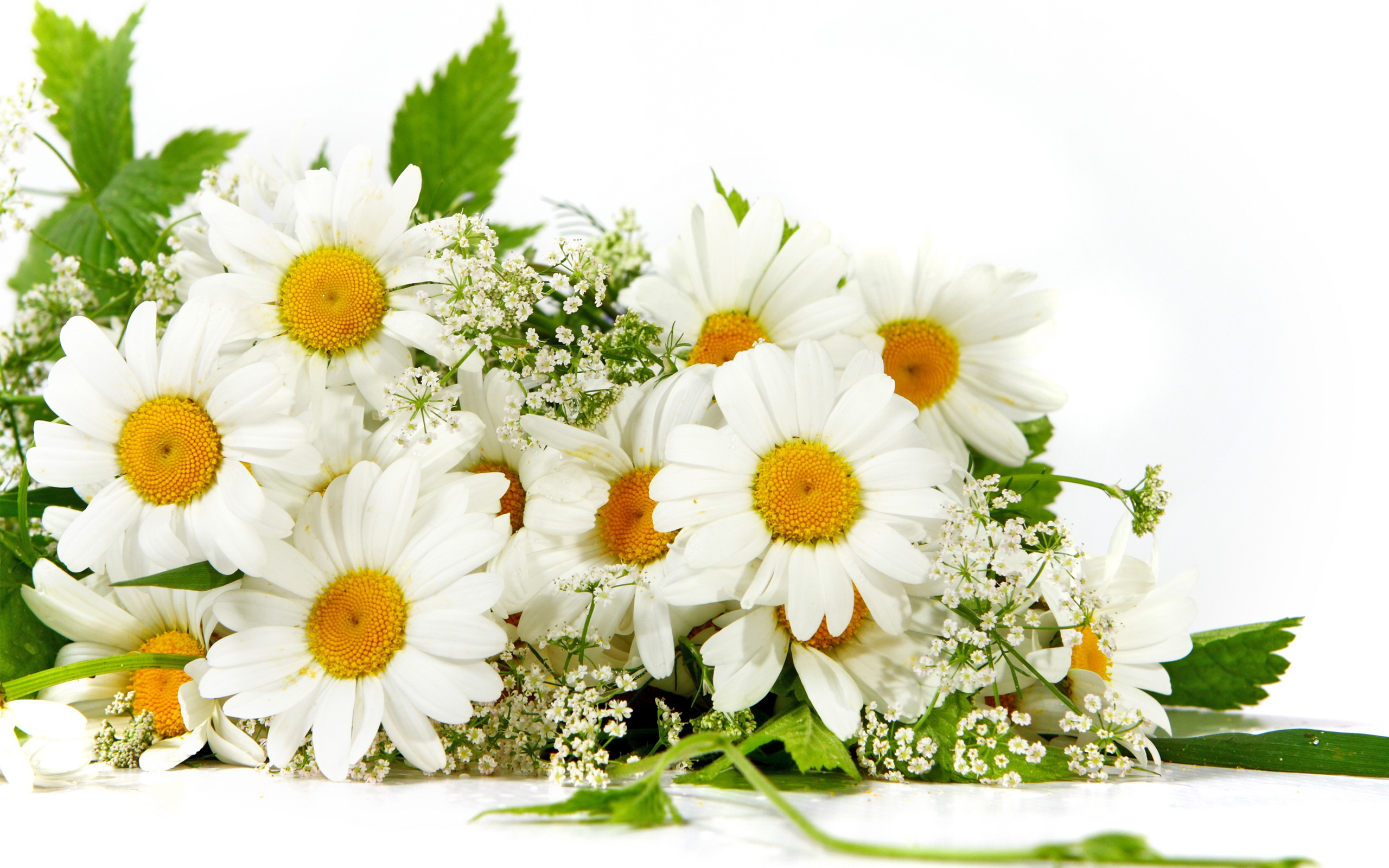 Nature_Flowers_Bouquet_of_daisies_030152_